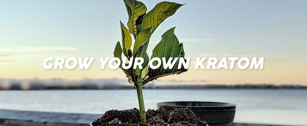 How-to-grow-your-own-Kratom