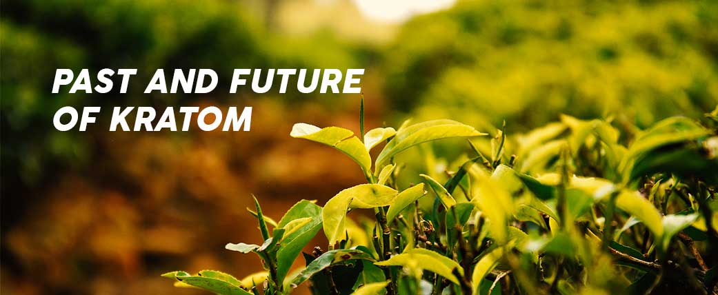 Past and Future of Kratom