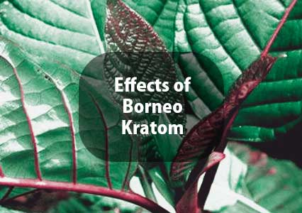 Effects-of-Borneo-Kratom