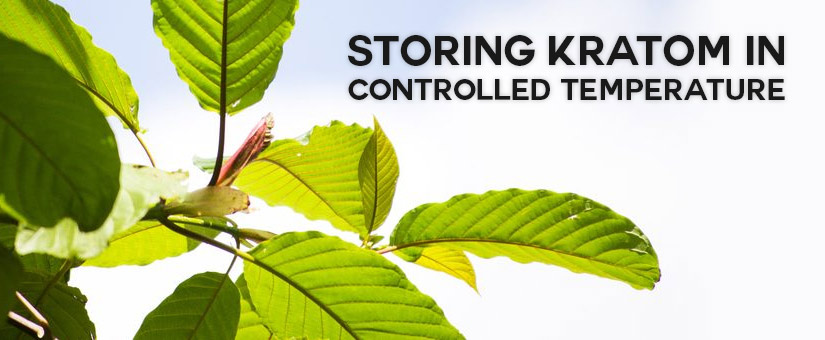 Keeping-Kratom-away-from-Sunlight