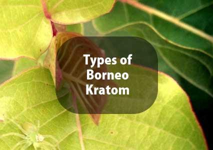 Types-of-Borneo-Kratom